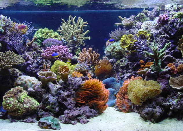 tank of the month march 2002 reefkeeping online magazine reef tank 632x451