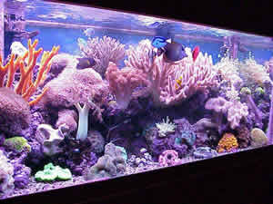75 gallon reef with VHO lighting & Lighting the Reef Tank: A Primer for Beginners by Doug Wojtczak ...