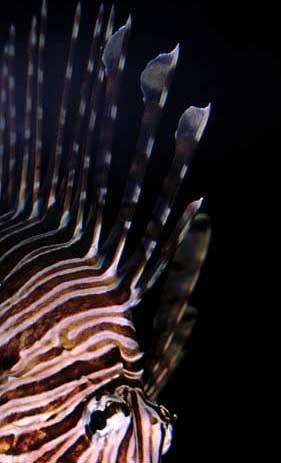 presupuesto acuario marino 200L Spines