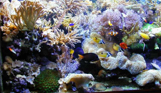 Tank Of The Month December 2002 Reefkeeping Online Magazine