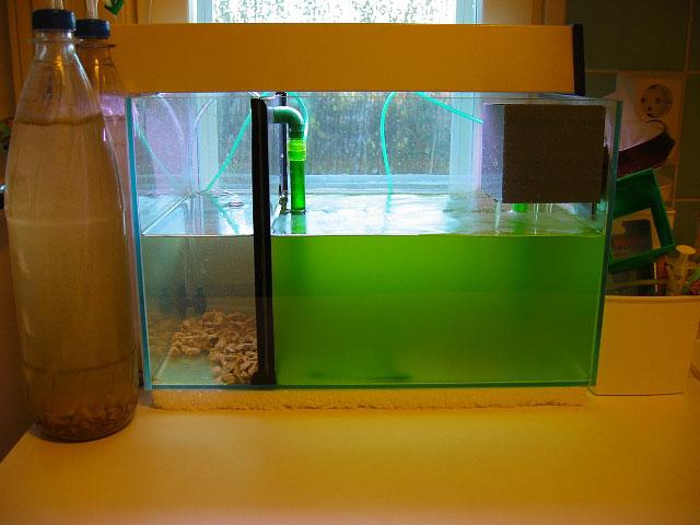 Планктоны в домашних условиях 151