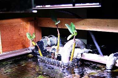 Mangrove Diving