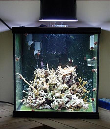 30 Gallon Tall Acrylic Aquarium Best Accent Chairs And