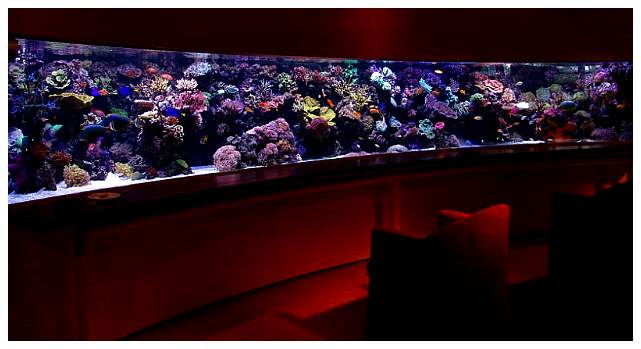 Click here for larger image - Mise en service aquarium ...