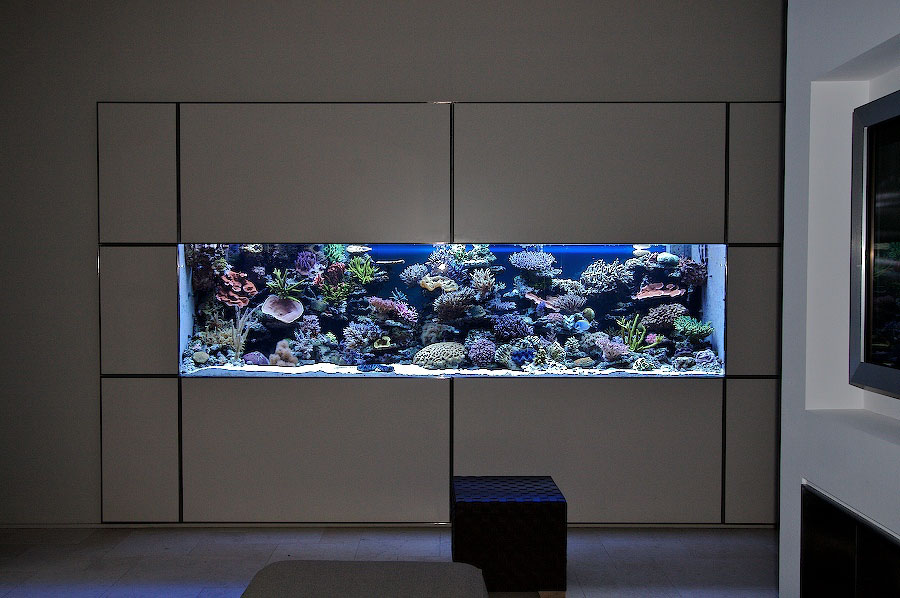 lets see some in-wall aquarium pictures - Reef Central Online ...
