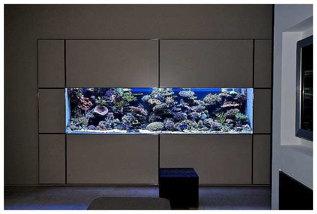 aquarium modern archives modern aquarium design for reef aquaria and freshwater 2017 fish. Black Bedroom Furniture Sets. Home Design Ideas