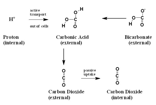 Photosynthesis and the Reef Aquarium, Part I: Carbon Sources by ...