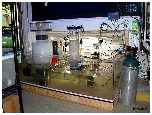 reefkeeping 101 sumps by marc levenson reefkeeping com