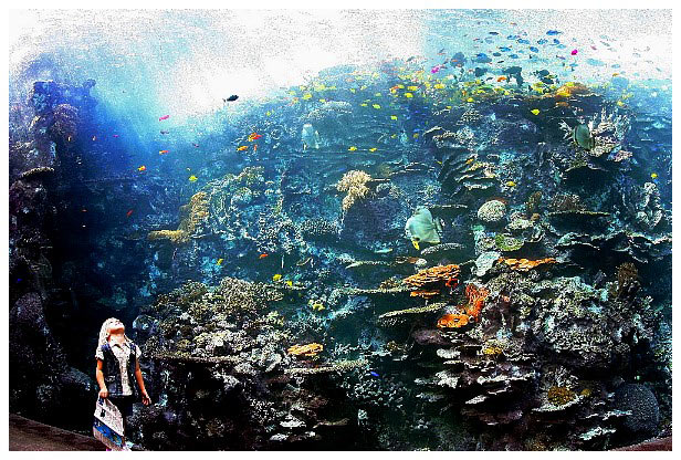 Georgia Aquarium The Pacific Barrier Reef Exhibit