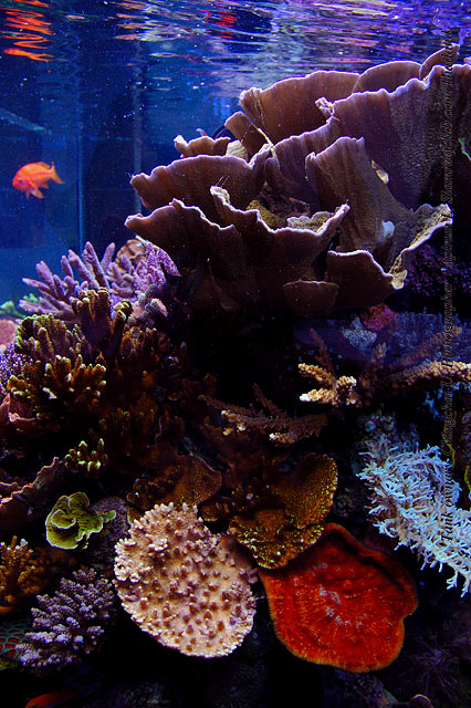 Tank of the Month - May 2008 - Reefkeeping com