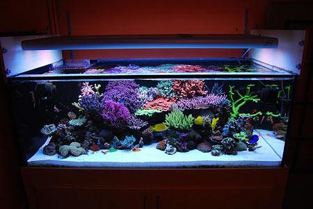 Led aquarium recifal
