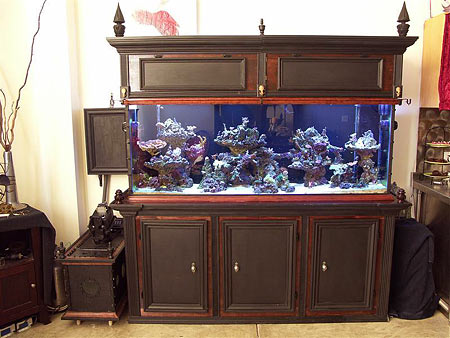 150 gallon cuttlefish reef and breeding system for 150 gallon fish tank dimensions