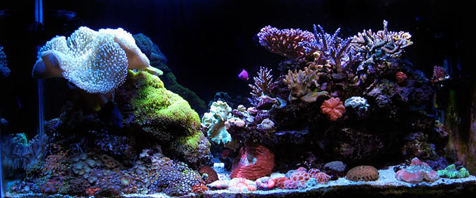 tank of the month april 2009 reefkeeping com