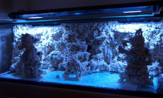 reefkeeping blog