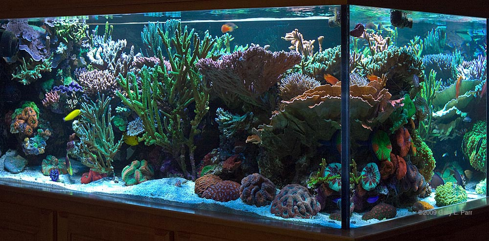 Image gallery 50 gallon aquarium for 50 gallon fish tank