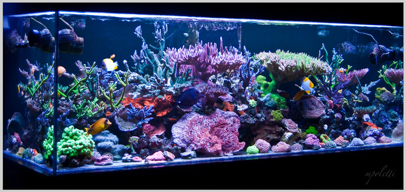 Reefkeeping magazine april 2014 tank of the month for 180 gallon fish tank