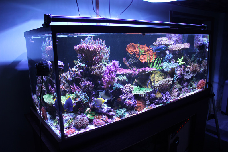 Reefkeeping magazine april 2015 tank of the month for 65 gallon fish tank
