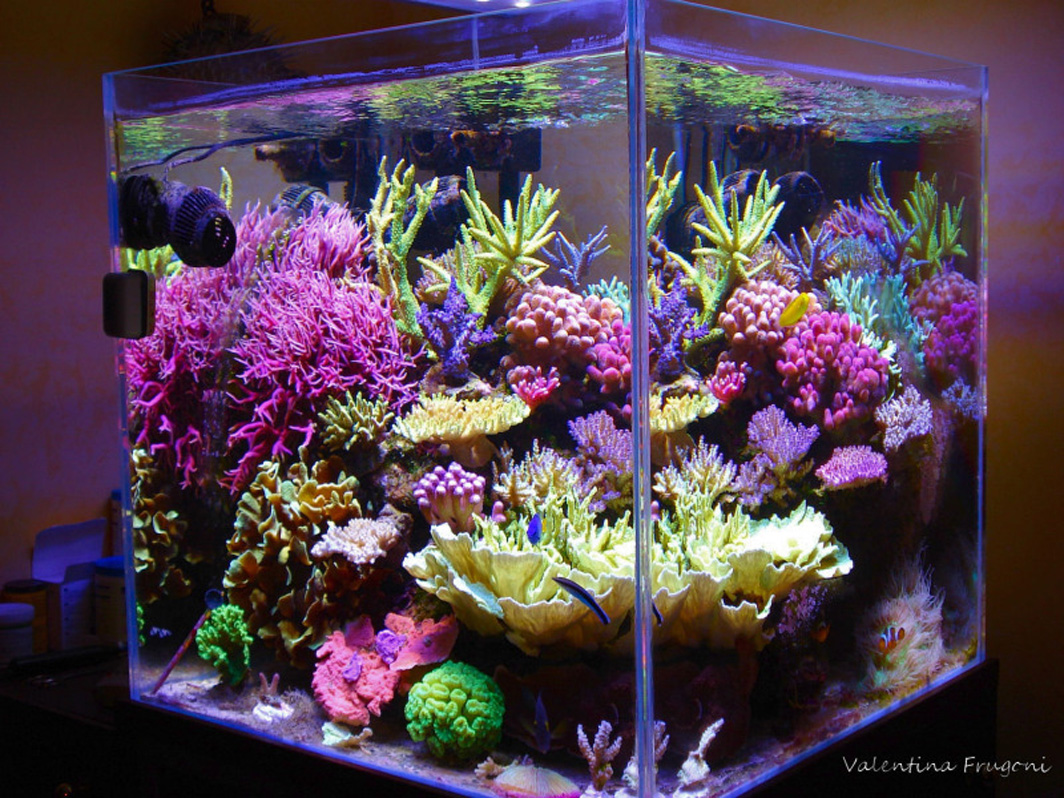 reefkeeping magazine august 2014 tank of the month. Black Bedroom Furniture Sets. Home Design Ideas