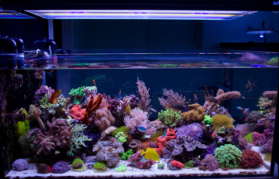 Reefkeeping magazine january 2016 tank of the month for Best fish for reef tank