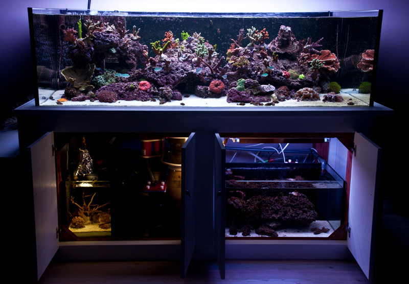 Reefkeeping Magazine July 2014 Tank Of The Month