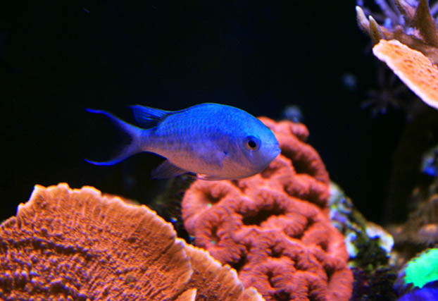 how to raise ph in fish tank with baking soda