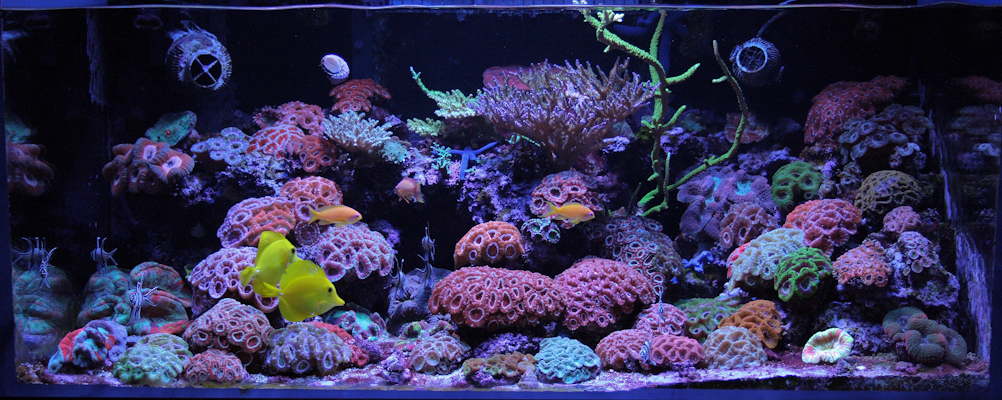 Reefkeeping Magazine Tank Of The Month
