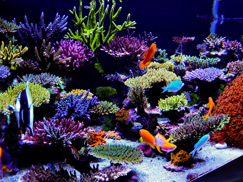 Reefkeeping magazine may 2014 tank of the month for Best fish for reef tank