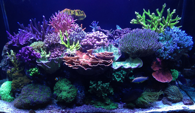 Reefkeeping Magazine May 2015 Tank Of The Month