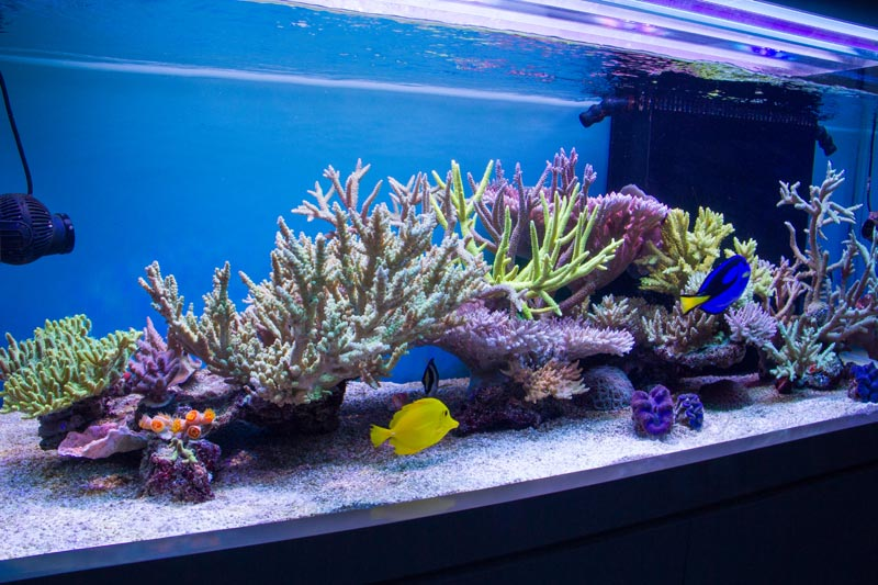Most Beautiful Aquascapes Beautiful Aquascaping Photo Collection Alter Minds A Collection Of