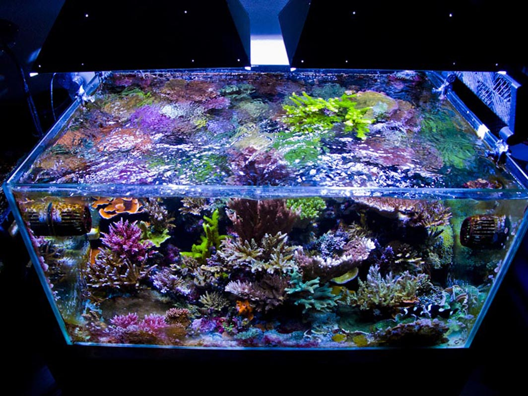 Reefkeeping magazine october 2013 tank of the month for Saltwater fish for 10 gallon tank