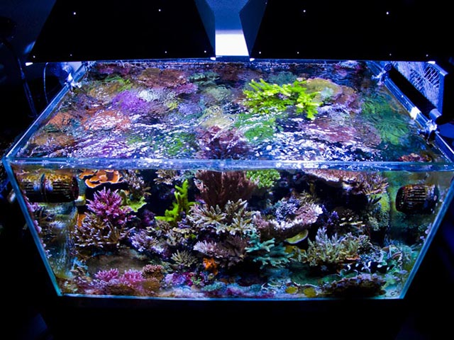 October 2013 tank of the month reef central online for Rimless fish tank