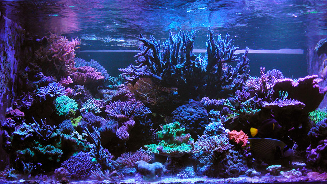 Reefkeeping Magazine September 2014 Tank Of The Month