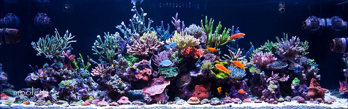 Reefkeeping Magazine February 2010 Tank Of The Month