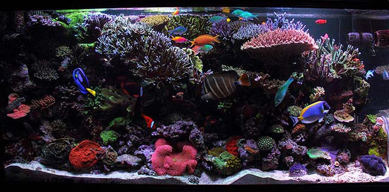 iPhone 4 background wallpapers of reef fish and coral