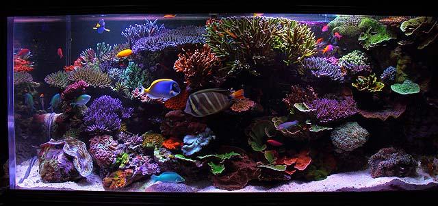Beautiful Reef 3D Aquarium Animated wallpapers