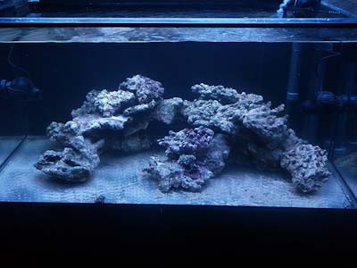 120g Reef Tank Move New Start Reef Central Online Community