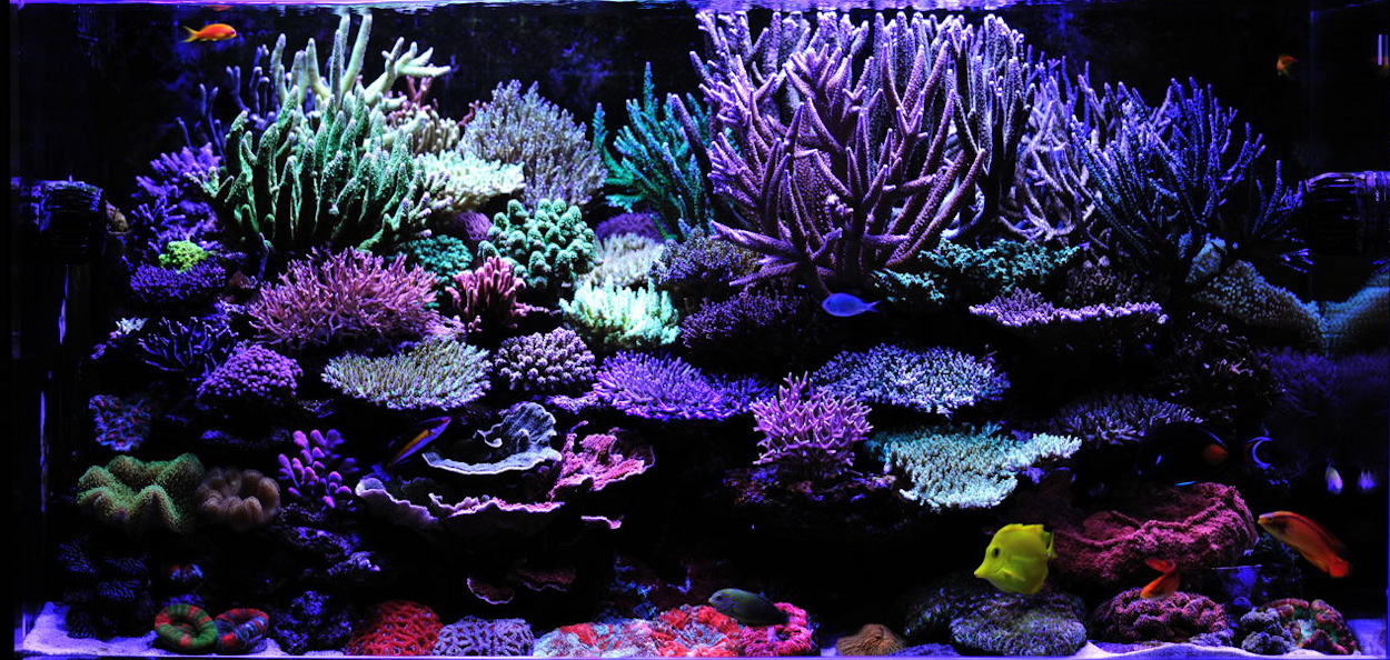 Reefkeeping magazine tank of the month for Best fish for reef tank