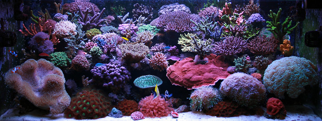 ... Reef Exotic Salt Water Fish, Aquariums & Corals 2017 - Fish Tank