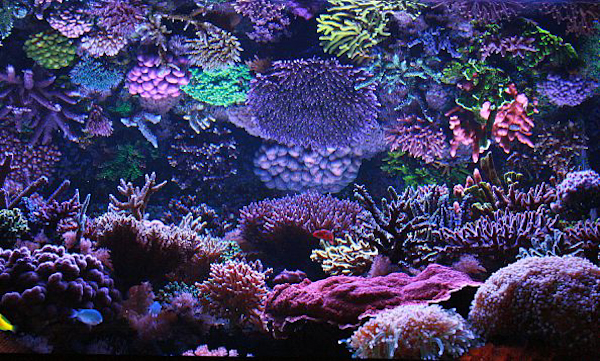aquarium backgrounds coral - photo #28