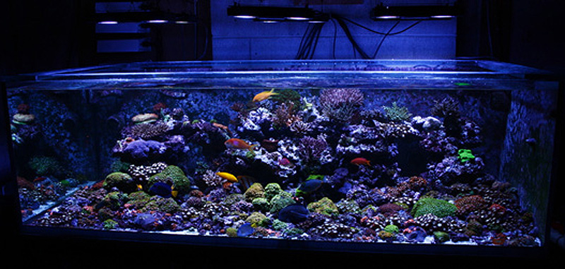 Reefkeeping magazine may 2012 tank of the month i2as kass for 150 gallon fish tank dimensions