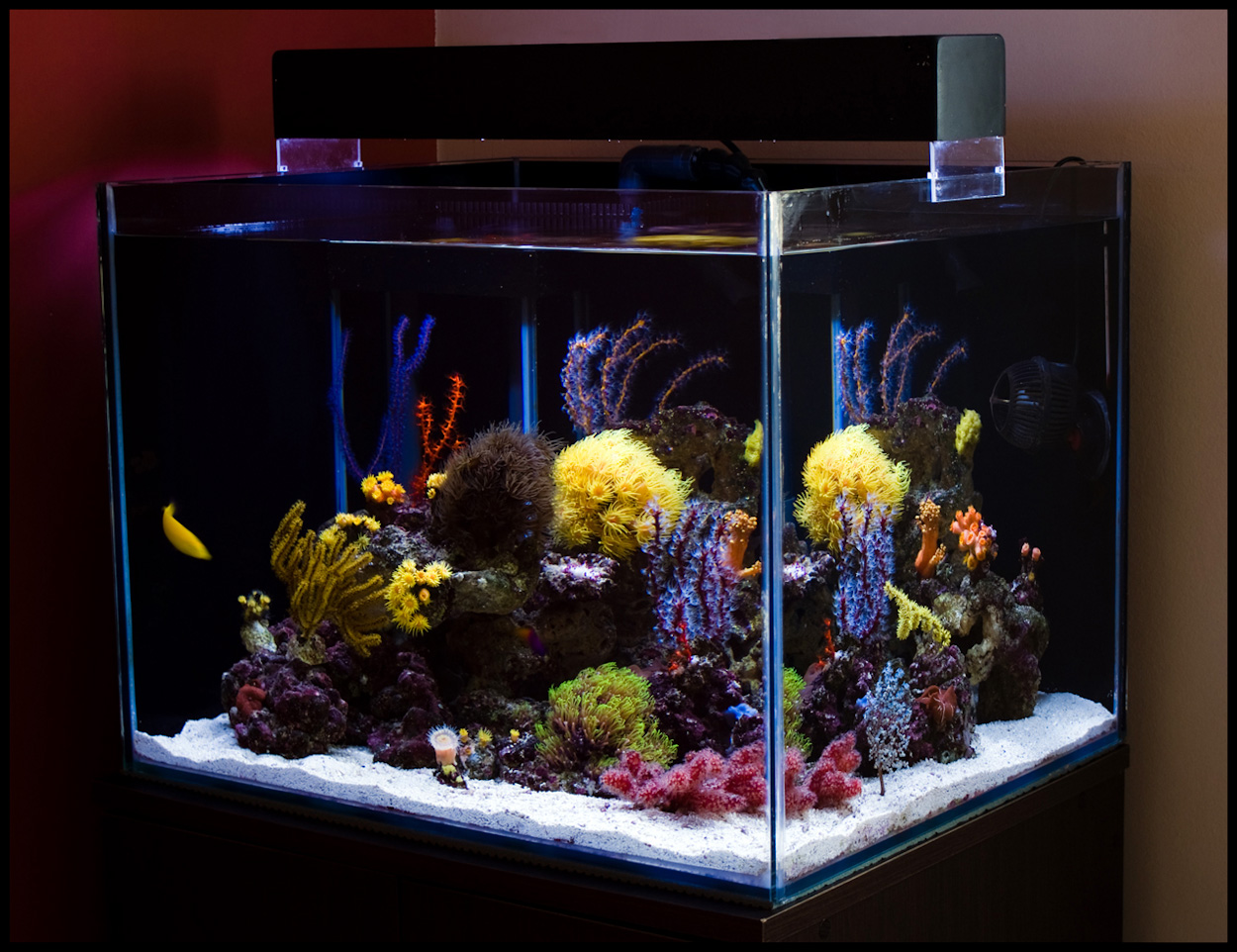 saltwater fish for 35 gallon tank aquarium effects. Black Bedroom Furniture Sets. Home Design Ideas