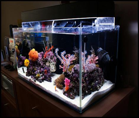 Reefkeeping magazine tank of the month for Aquarium corner decoration